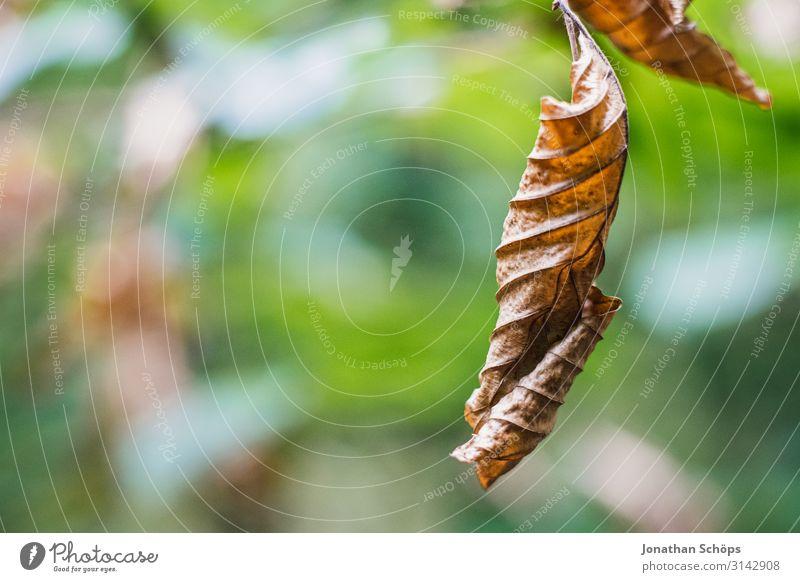 vertrocknetes Laubblatt im Herbst Natur ästhetisch Traurigkeit Trauer Müdigkeit Unlust Einsamkeit Erschöpfung Jahreszeiten Herbstlaub Blatt trocken Dürre braun
