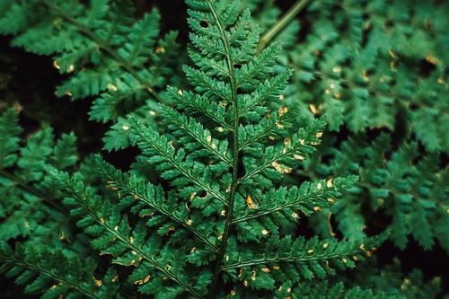 grüner Farn Textur Draufsicht Umwelt Natur Herbst Pflanze Garten Park Wald ästhetisch Jahreszeiten Hintergrundbild Grünstich Naturwuchs Blatt Farbfoto
