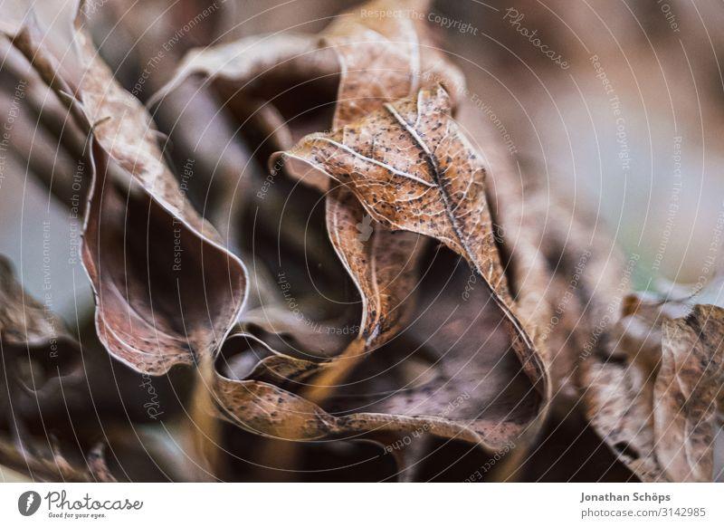 Makro von vertrockneten Herbstblättern Natur ästhetisch Traurigkeit Sorge Trauer Liebeskummer Unlust Schmerz Enttäuschung Einsamkeit Erschöpfung schuldig Scham