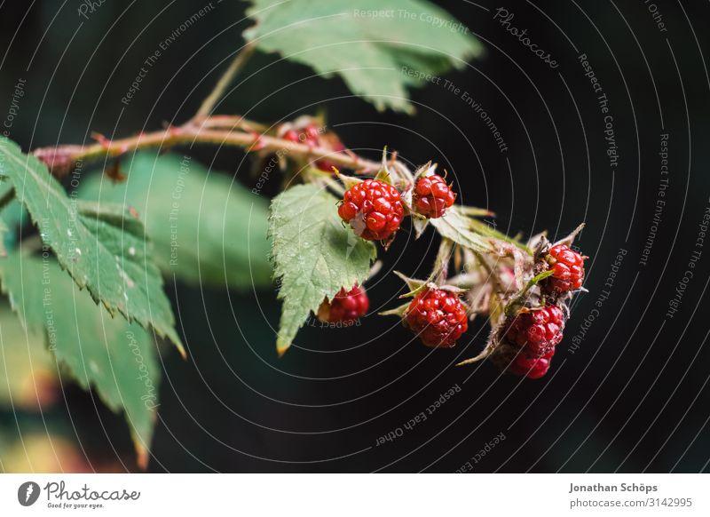 Nahaufnahme Brombeeren am Busch Außenaufnahme Jahreszeit Outdoor herbst natur Brombeerbusch Beeren wildbeere Wildpflanze Natur Farbfoto Frucht Pflanze lecker