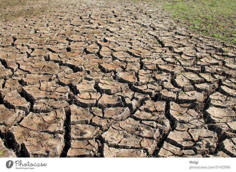 von der Hitze ausgetrockneter Erdboden mit Rissen und Krustenbildung auf einem Acker Umwelt Natur Landschaft Pflanze Erde Sommer Klima Klimawandel Gras Feld