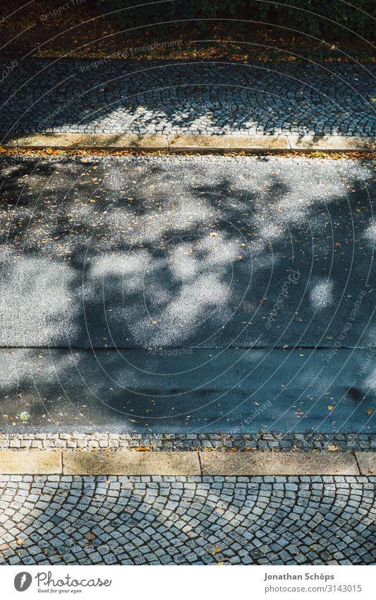 Straße mit Herbstlaub und Schatten Natur gelb grau Jahreszeiten Wege & Pfade Vogelperspektive Fußweg Bordsteinkante minimalistisch Schattenspiel Sonnenlicht
