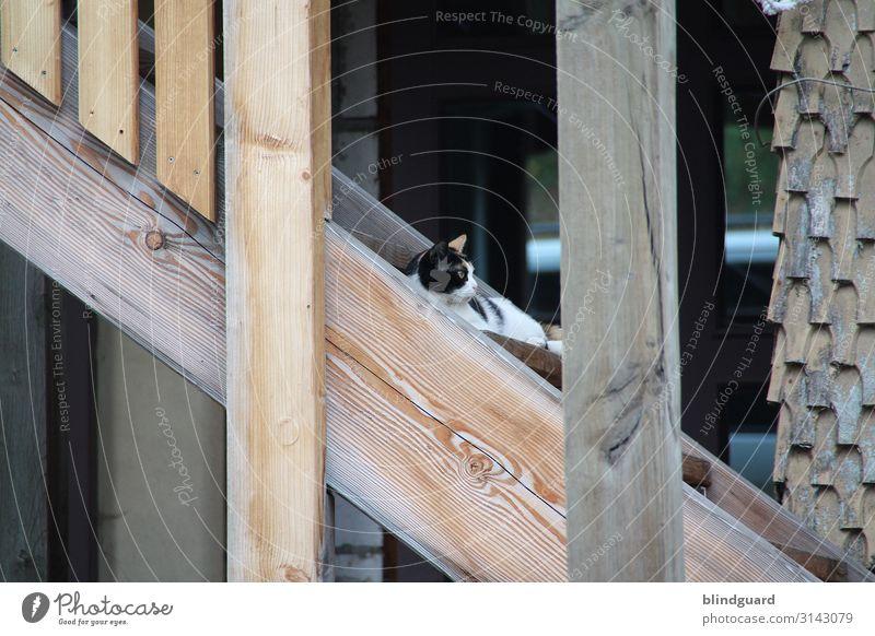 Montag ... da bleib ich noch etwas liegen Katze weiß Haus Erholung Tier schwarz Holz Wand Garten Mauer braun Fassade Häusliches Leben Wohnung Zufriedenheit