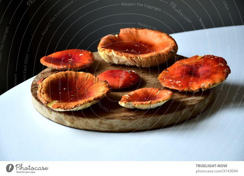 Fliegenpilze trocknen lassen... Herbst Pflanze Wildpflanze Pilz Pilzhut natürlich rund trocken braun grau orange rot weiß Kraft achtsam Wahrheit Neugier