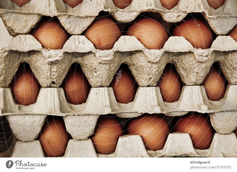Ei, Ei, Ei ... Ostervorbereitungen Lebensmittel Ernährung Frühstück Mittagessen Landwirtschaft Forstwirtschaft Nutztier braun grau Hühnerei zerbrechlich Lager
