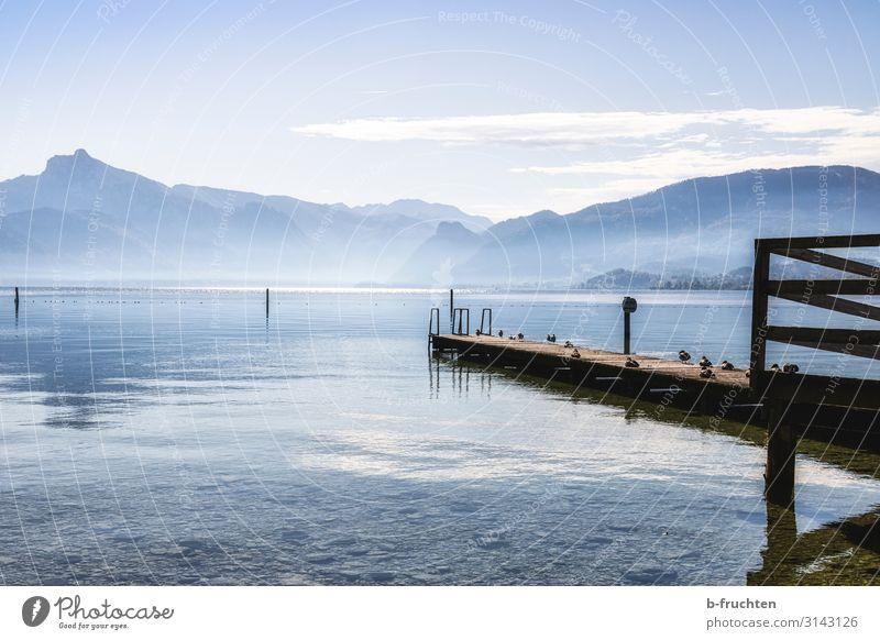 Gebirgssee Sommer Berge u. Gebirge wandern Umwelt Natur Wasser Herbst Nebel Alpen Seeufer genießen schön ruhig Idylle Traunsee Salzkammergut Österreich Steg