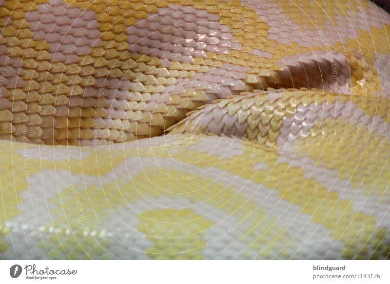 Snakes in Paradise Tier Wildtier Schlange Schuppen Zoo 1 schlafen gelb grau rosa weiß Reptil Farbfoto Innenaufnahme Detailaufnahme Menschenleer Kunstlicht