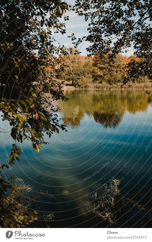 Herbstidyll Umwelt Natur Landschaft Himmel Sonne Schönes Wetter Baum Sträucher Seeufer frisch nachhaltig natürlich blau braun grün Einsamkeit Erholung Idylle
