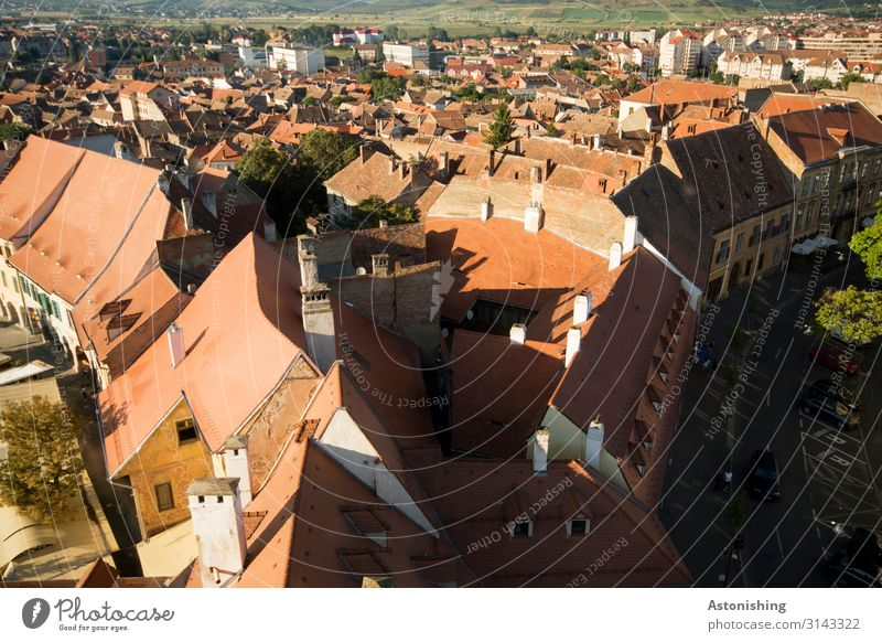 Dächer Sibius Natur Pflanze Baum Hermannstadt Rumänien Stadt Stadtzentrum Haus Platz Dach Dachrinne Schornstein Straße alt historisch grün rot Ferne Aussicht