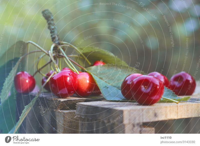 Kirschen schmecken immer Lebensmittel Frucht Ernährung Bioprodukte Vegetarische Ernährung Fingerfood Natur Sommer Nutzpflanze Garten blau braun gelb grün rot
