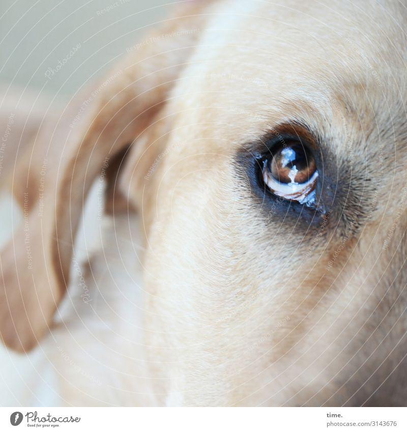 Flugbegleiter Tier Haustier Hund Tiergesicht Ohr Auge Blick 1 beobachten warten Willensstärke Tierliebe Wachsamkeit geduldig Leben Ausdauer Neugier Interesse