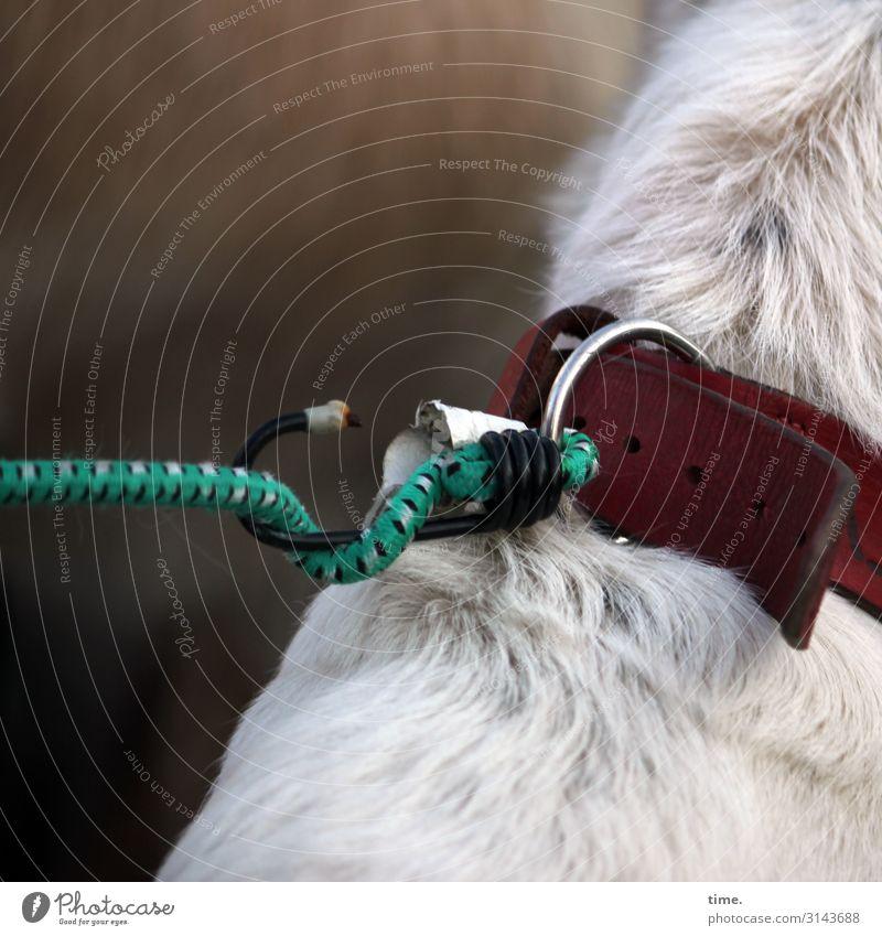 Spannungsbogen Tier Haustier Hund Fell 1 Hundehalsband Hundeleine Haken Ring sitzen warten einfach Sicherheit Schutz Partnerschaft entdecken Genauigkeit Idee