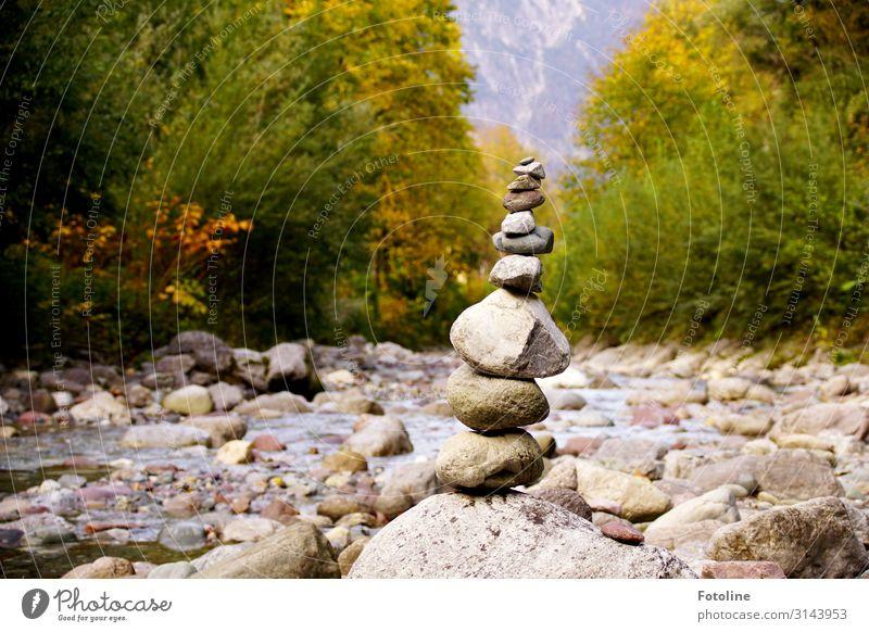 relax Umwelt Natur Landschaft Pflanze Urelemente Erde Wasser Herbst Baum Wald Alpen Berge u. Gebirge Flussufer nass natürlich grau grün Österreich Bach Stein
