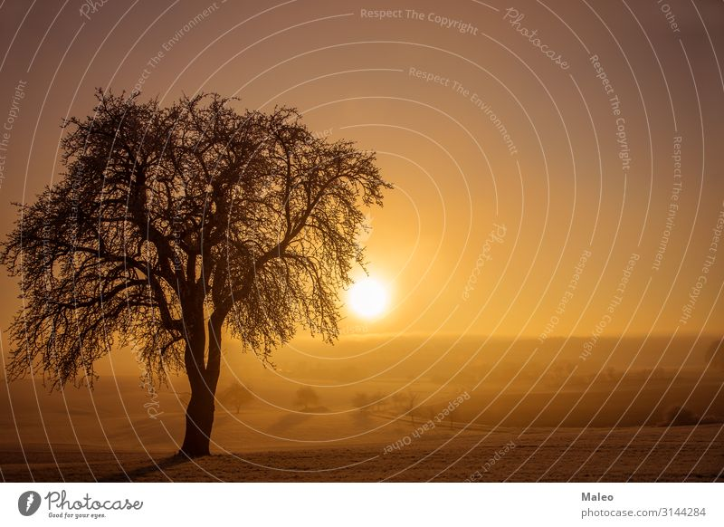 Sonnenaufgang Hintergrundbild kalt Landschaft Morgendämmerung Feld Frost gefroren Horizont horizontal Eis Licht Natur Außenaufnahme Szene Jahreszeiten Himmel