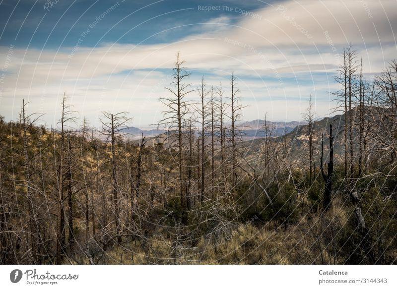 Totholz Berge u. Gebirge wandern Umwelt Landschaft Pflanze Himmel Wolken Horizont Winter Schönes Wetter Baum Gras Sträucher Fichte Fichtenwald Wald Hügel Felsen
