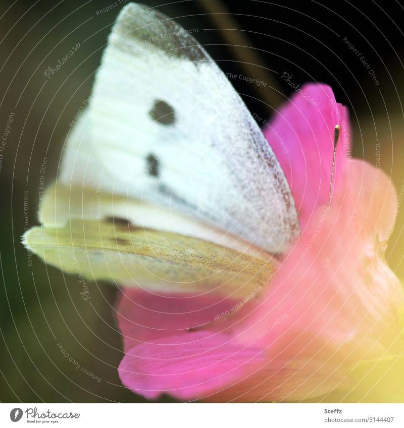 looking for a deeper level Natur Sommer schön weiß Blume Wald Umwelt Blüte natürlich Deutschland Garten rosa Romantik Blühend Flügel nah