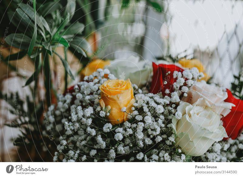 Blumenstrauß aus Rosen Rosenstrauß farbenfroh Farbe Dekoration & Verzierung Frühling Blüte Schönheit Roséwein geblümt schön rosa Blütenblatt Geschenk Blütezeit
