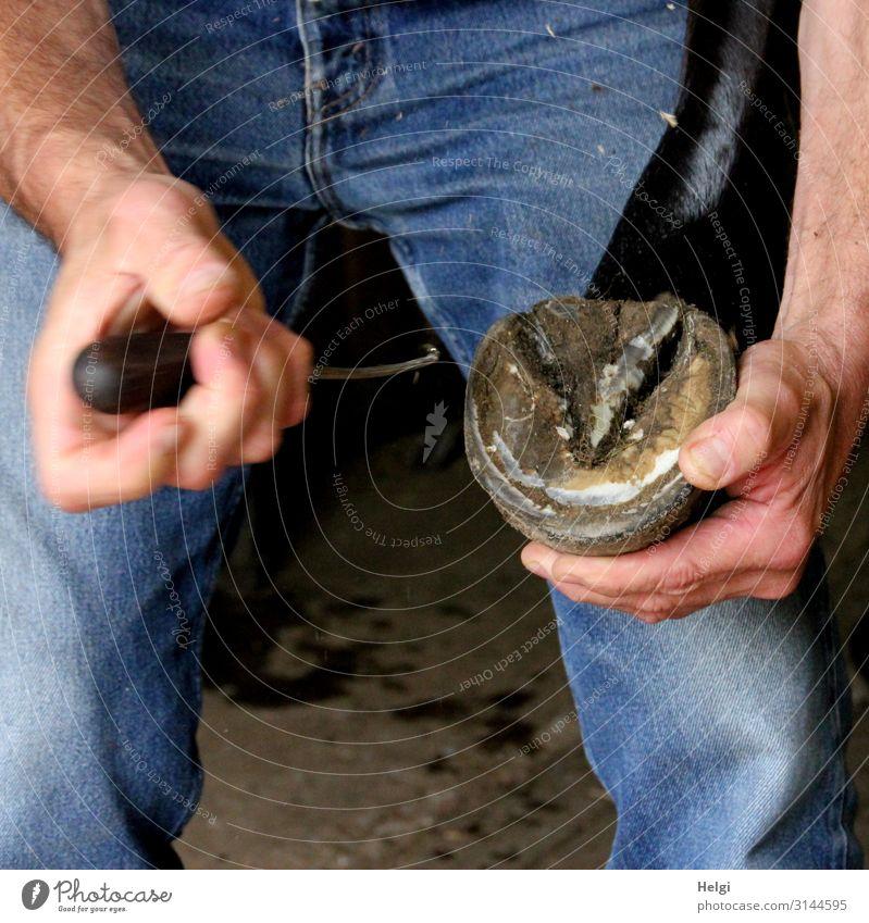 Hände eines Mannes halten einen Pferdehuf zur Reinigung Mensch Arme Hand Finger Beine 1 Jeanshose Tier Haustier Huf festhalten authentisch einzigartig blau
