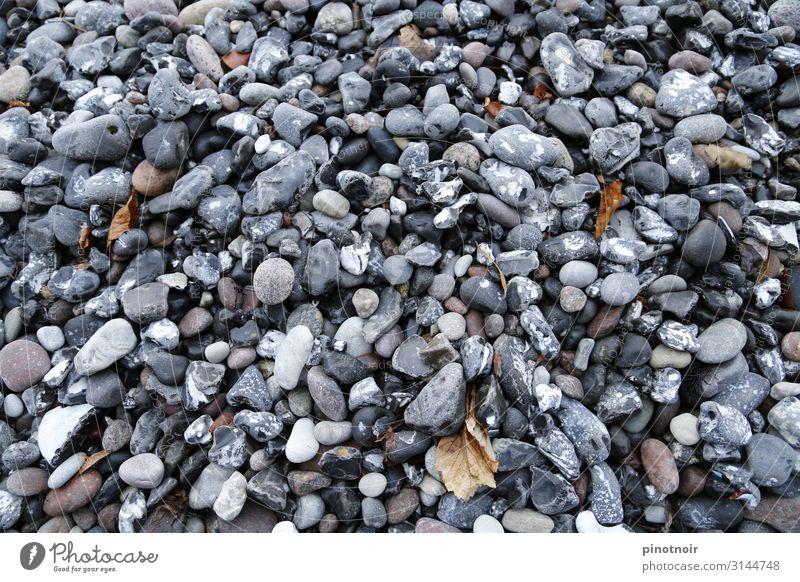 Strandkiesel Umwelt Natur Herbst Küste Ostsee Meer Stein maritim horizontal Gezeiten Grauwert Hintergrundbild grau Strukturen & Formen Kieselsteine Kieselstrand