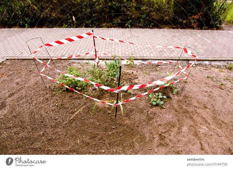 Natur pur Garten Blume Pflanze Beet Vorgarten anpflanzung Umweltschutz Haus Stadthaus Neubau grün Berlin Vorstadt Zaun eingezäunt umfrieden flatterband Grenze