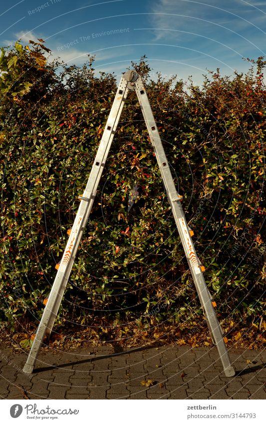 Stehleiter again Erholung Ferien & Urlaub & Reisen Pflanze Garten Herbst Himmel Himmel (Jenseits) Schrebergarten Kleingartenkolonie Blatt Herbstlaub Natur