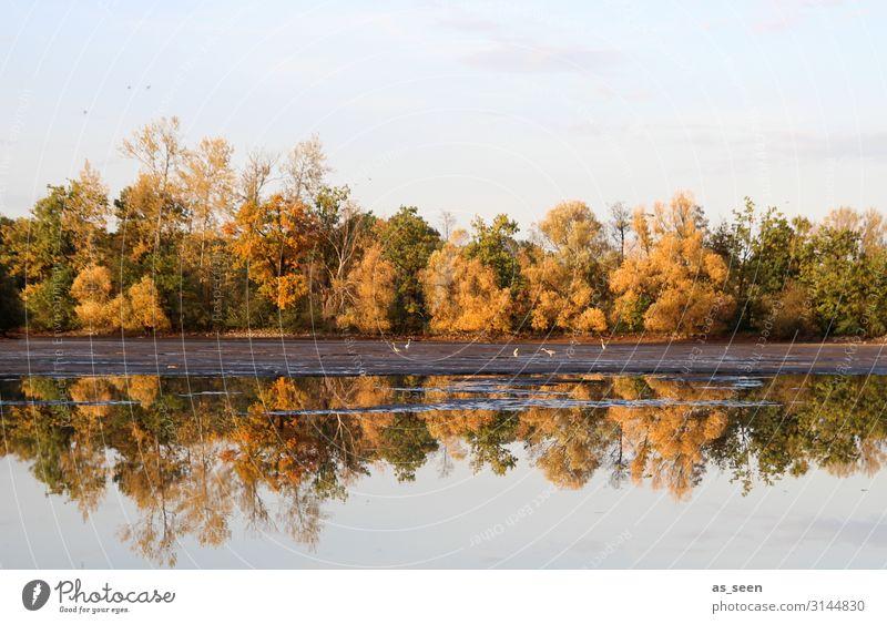 Herbst am See Sinnesorgane Erholung ruhig Meditation Ausflug Umwelt Natur Landschaft Pflanze Wasser Himmel Baum Herbstfärbung Herbstlaub Ahorn Laubbaum Park