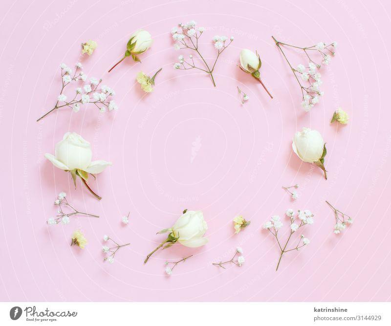 Blumen auf einem hellrosa Hintergrund Design Dekoration & Verzierung Hochzeit Frau Erwachsene Mutter Rose oben elegant Kreativität romantisch flache Verlegung