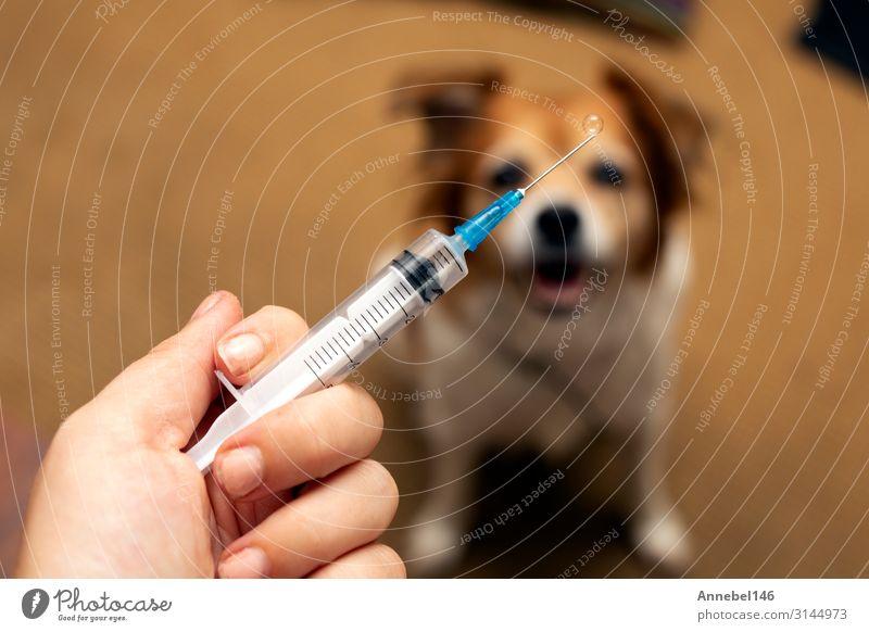 Hand mit Spritze und Hund zur Vorbereitung der Impfstoffinjektion Behandlung Krankheit Medikament Labor Arzt Büro Krankenhaus Mensch Tier Handschuhe Haustier