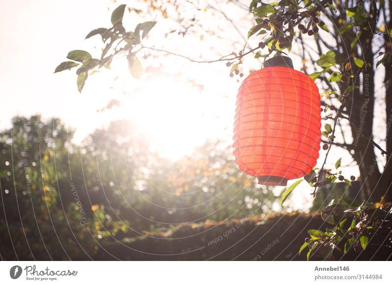 Schöne bunte Laternen, die bei Sonnenlicht an den Bäumen hängen. schön Ferien & Urlaub & Reisen Sommer Garten Dekoration & Verzierung Lampe Feste & Feiern Kunst