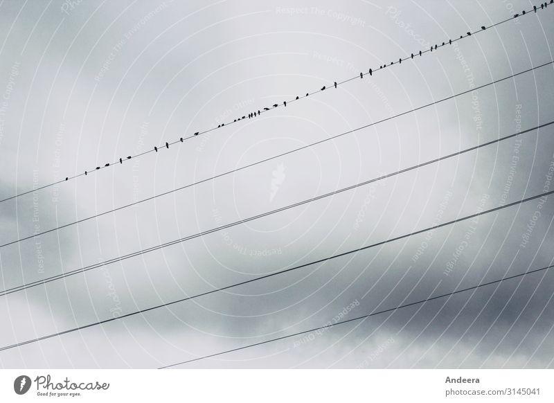 Schwindelfrei Himmel Natur Wolken Tier Winter dunkel Herbst Umwelt Vogel grau oben Wetter Luft Energiewirtschaft Wildtier trist