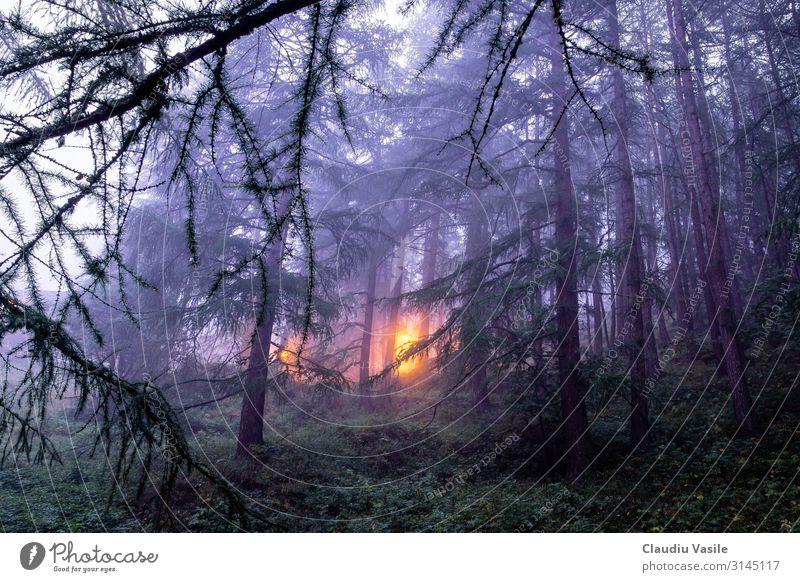 Nebliger Wald mit einem Licht in der Ferne, Zermatt, Schweiz Ferien & Urlaub & Reisen Tourismus Ausflug Berge u. Gebirge wandern Natur Landschaft Pflanze Nebel