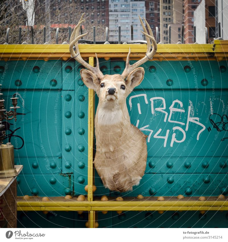 Der letzte Hirsch in New York Ferien & Urlaub & Reisen Stadt Tier Graffiti gelb Tourismus Tod braun Freizeit & Hobby Metall Wildtier kaufen Vergänglichkeit