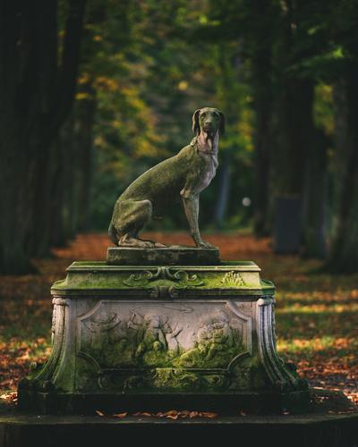 Statue Lifestyle elegant Stil Freizeit & Hobby Mensch Leben Kunst Kunstwerk Skulptur Zoo Umwelt Natur Landschaft Park Wald Tier Haustier Hund 1 beobachten