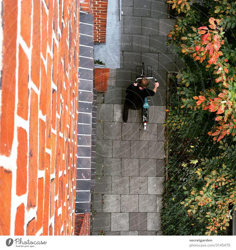 Tschüss Homeoffice! Fahrrad Bürgersteig Vogelperspektive Beginn Mann Fassade Backsteinwand Pflanzen Wegesrand Sommer Pflastersteine Wege & Pfade Farbfoto Tag