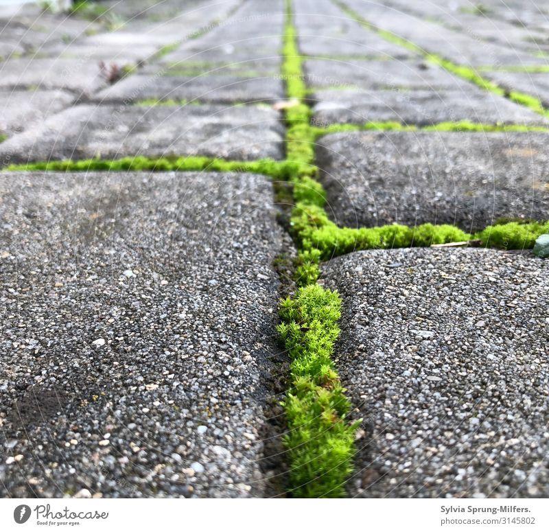 Ohne Moos nix los Natur Pflanze grün Leben Wege & Pfade frisch Wachstum Kraft Erfolg Perspektive Wandel & Veränderung Hoffnung Netzwerk Konflikt & Streit