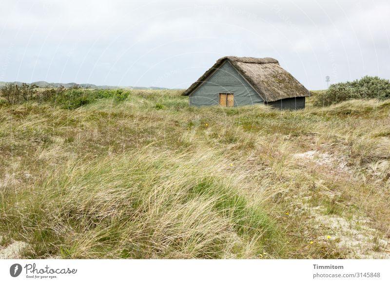 Ruhige Lage Ferien & Urlaub & Reisen Umwelt Natur Landschaft Pflanze Wetter Gras Wiese Dänemark Hütte Wege & Pfade einfach natürlich blau braun grün Gefühle