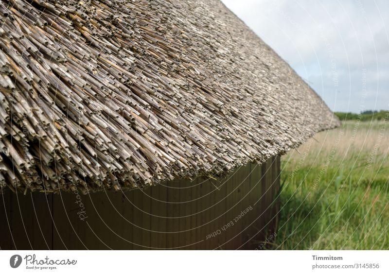 Reetdach Ferien & Urlaub & Reisen Umwelt Natur Landschaft Pflanze Wetter Schönes Wetter Gras Wiese Dänemark Hütte Mauer Wand Dach Holz einfach natürlich blau