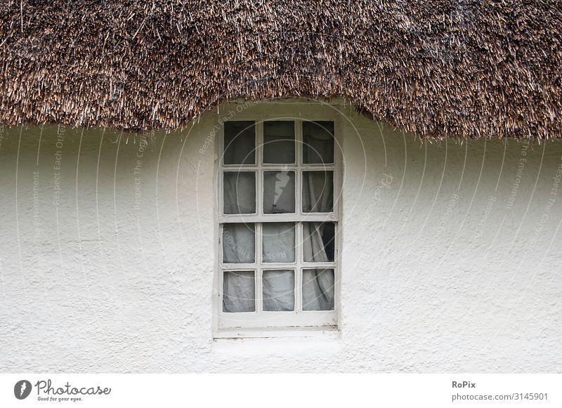 Fenster eines englischen cottages. Sommer Wetter Fachwerkhaus Fassade wand Klettenpflanzen Landsitz England Schottland Mauerwerk framework Wohnung Behausung