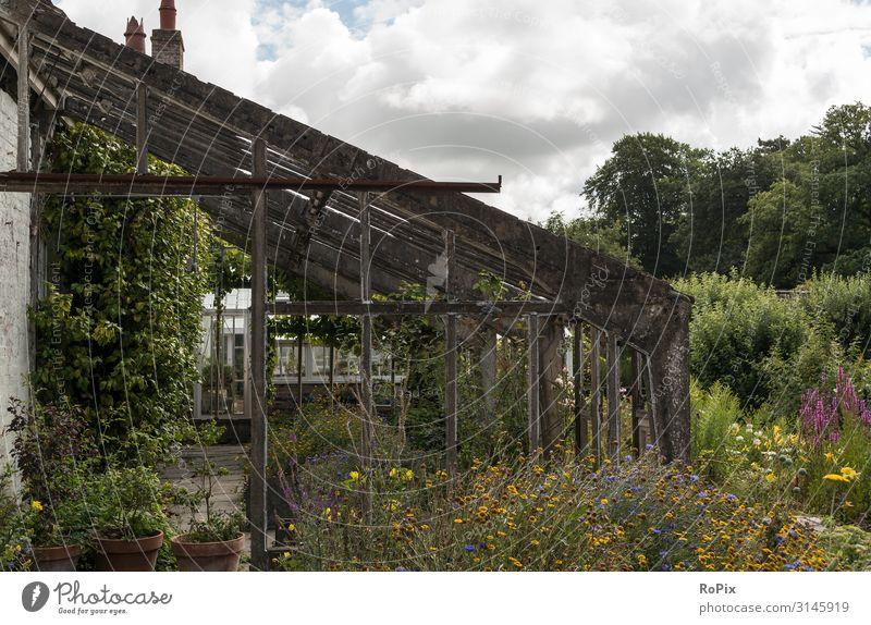 Dessertgewächshaus in einem wilden Garten. Lifestyle Stil Design Wellness Leben Erholung Freizeit & Hobby Häusliches Leben Bildung Arbeit & Erwerbstätigkeit