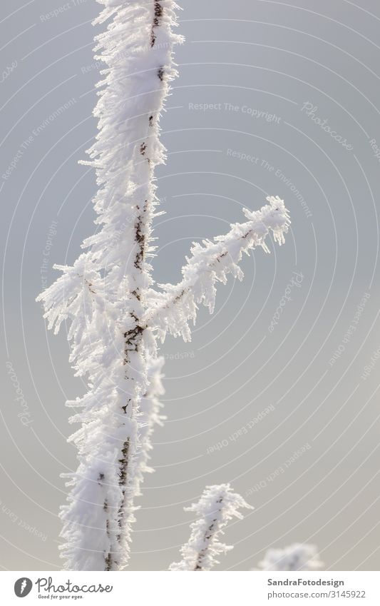 A frosty branch covered with snow Freizeit & Hobby Ausflug Winter Schnee Winterurlaub wandern Garten Natur Himmel Wetter Park Wald Coolness kalt weiß season