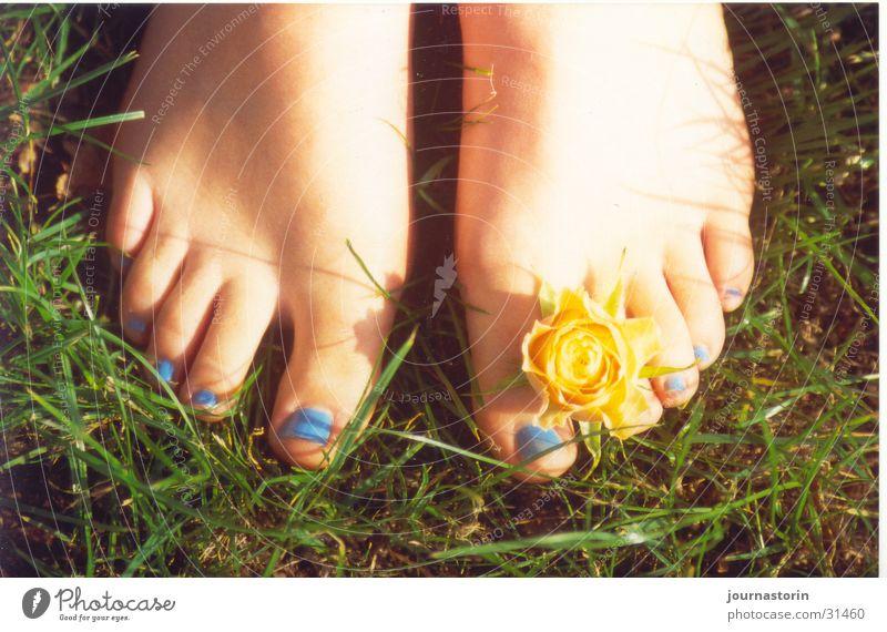 fußblume Natur Sonne Blume blau Sommer gelb Wiese Gras Fuß Haut Romantik Barfuß Nagellack