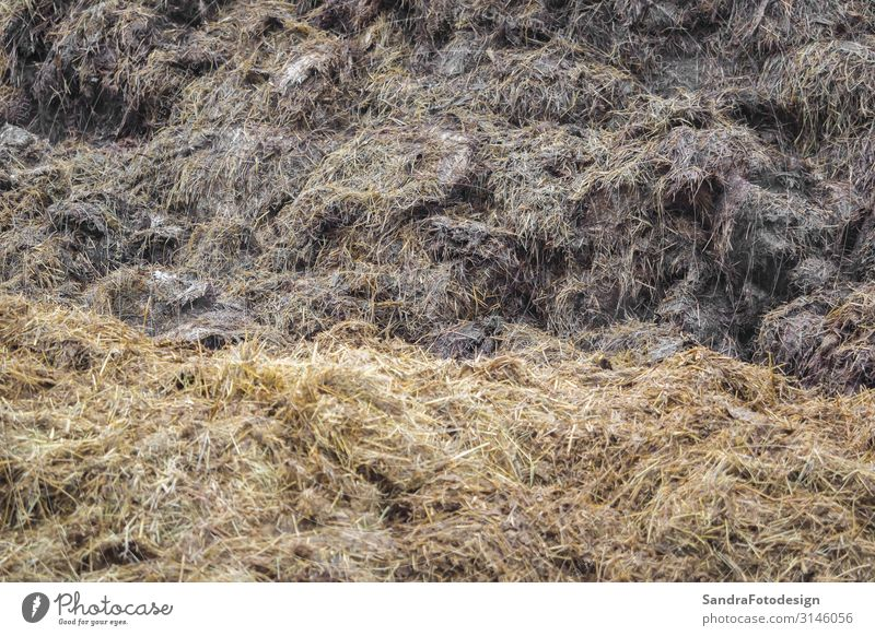 A big dung heap on a farm Sommer Umwelt Natur Landschaft Erde Feld braun agricultural agriculture bale bales brown country countryside crop Düngung environment