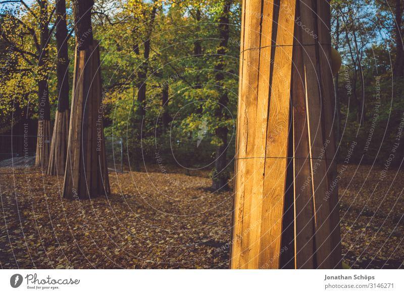 Bäume im Herbstwald vor einer Baustelle beschützt Abendsonne Achtsamkeit Außenaufnahme Besinnung Chemnitz Jahreszeit Laub Oktober Outdoor Ruhe Sonnenlicht