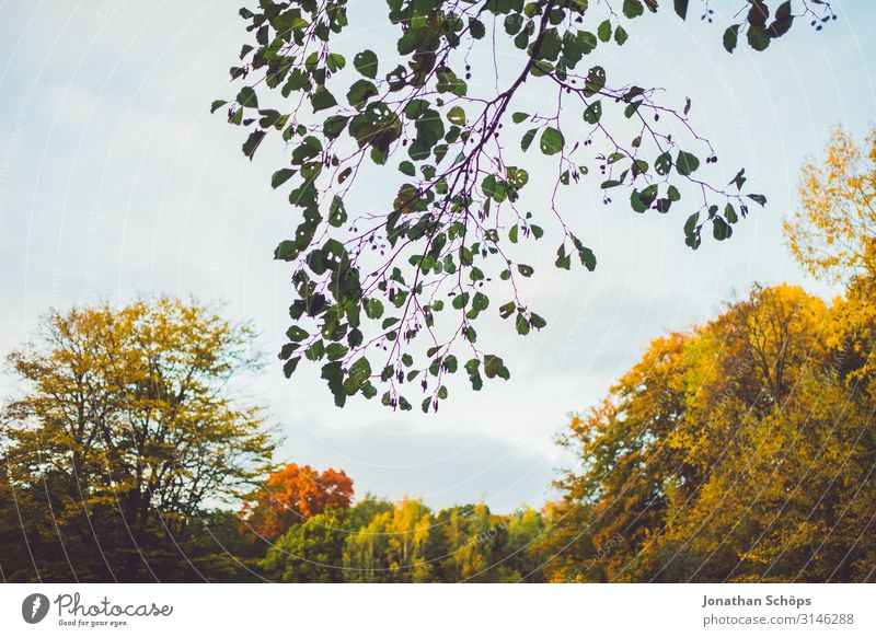 Zweig ragt in Himmel vor Herbstwald ruhig Natur Blatt Wald gelb achtsam Vergänglichkeit Abendsonne Jahreszeiten Oktober herbstlich mehrfarbig orange