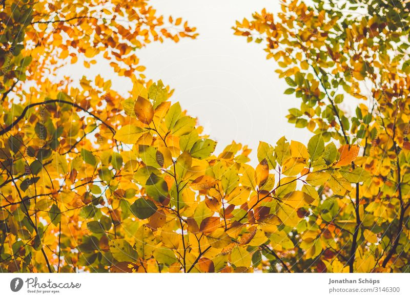 bunte Herbstblätter mit Lücke für den Himmel ruhig Natur Blatt Wald gelb achtsam Vergänglichkeit Abendsonne Jahreszeiten Oktober herbstlich mehrfarbig orange