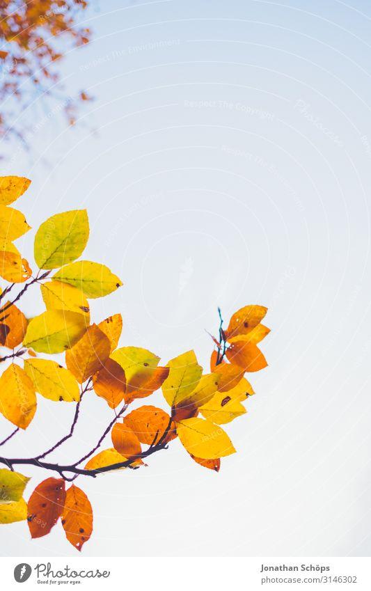 bunte Herbstblätter ragen in den Himmel ruhig Natur Blatt Wald gelb achtsam Vergänglichkeit Abendsonne Chemnitz Jahreszeiten Oktober herbstlich mehrfarbig