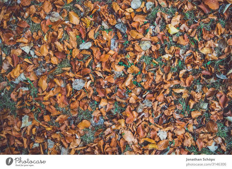 Herbstlaub auf Wiese Draufsicht ruhig Natur Blatt Wald gelb achtsam Vergänglichkeit Abendsonne Chemnitz Jahreszeiten Oktober herbstlich mehrfarbig braun