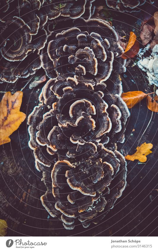 Pilz am Baum Abendsonne Achtsamkeit Außenaufnahme Besinnung Jahreszeit Laub Oktober Outdoor Ruhe Sonnenlicht Spaziergang Tag Vergänglichkeit blätter bunt farbig