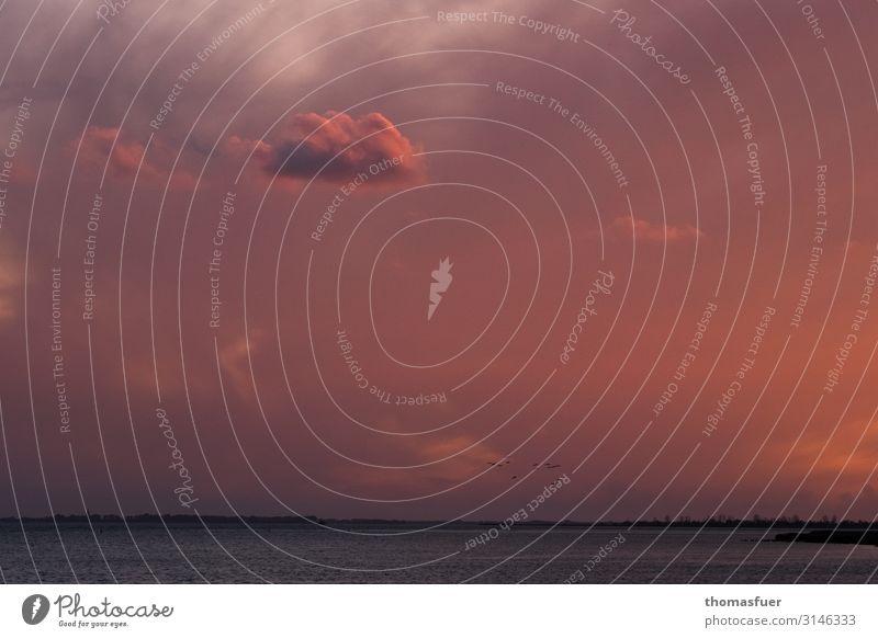 Abendrot am Meer mit Wolke Umwelt Natur Landschaft Erde Luft Wasser Himmel Wolken Horizont Sonnenaufgang Sonnenuntergang Sommer Schönes Wetter Wind Wellen Küste