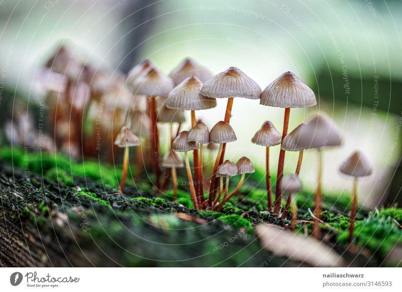 Pilze, Pfälzerwald Umwelt Natur Pflanze Herbst Moos Wildpflanze Galerina Park Wald Wachstum dünn natürlich niedlich grün weiß friedlich Farbe Farbfoto